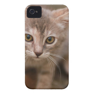 Funda Para iPhone 4 De Case-Mate Gatito juguetón