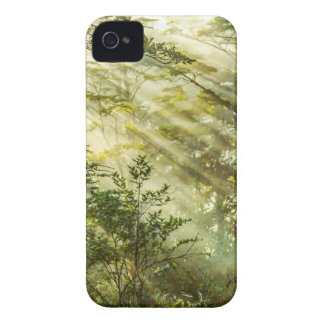 Funda Para iPhone 4 De Case-Mate Parque de Queulat, paisaje del bosque de la