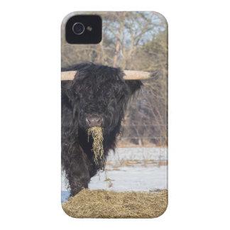 Funda Para iPhone 4 De Case-Mate Toro escocés del montañés que come el heno en
