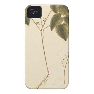 Funda Para iPhone 4 Estudio de la flor - acuarela