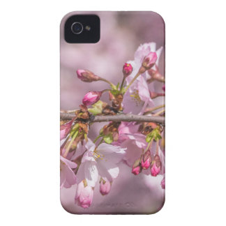 Funda Para iPhone 4 Flores de cerezo