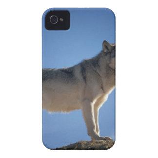 Funda Para iPhone 4 Fox gris y blanco que se coloca en campo de la