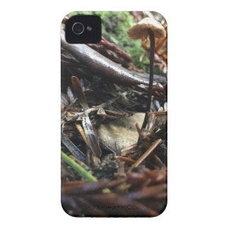 Funda Para iPhone 4 No dispare la seta