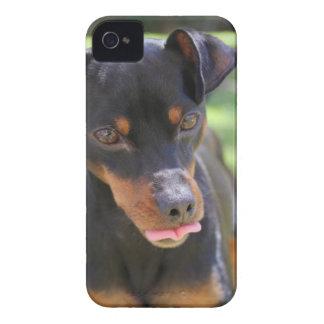 Funda Para iPhone 4 perro