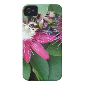Funda Para iPhone 4 Primer rojo de dos flores de la pasión al aire