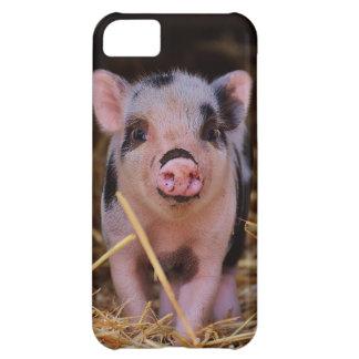 Funda Para iPhone 5C mini cerdo