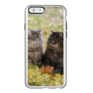 Funda Para iPhone 6 Plus Incipio Feather Shine Gatos