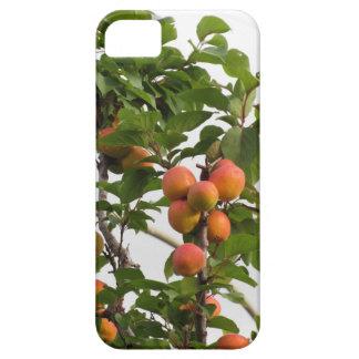 Funda Para iPhone SE/5/5s Albaricoques maduros que cuelgan en el árbol.