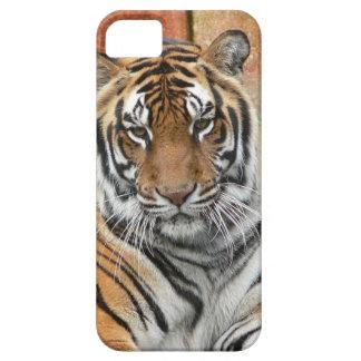 Funda Para iPhone SE/5/5s Alquileres Tigres en la reflexión