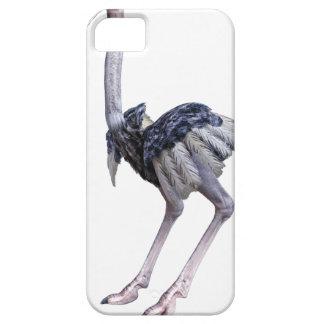 Funda Para iPhone SE/5/5s Avestruz