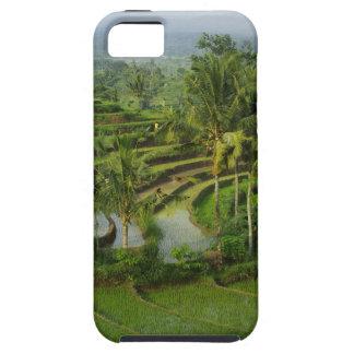 Funda Para iPhone SE/5/5s Bali - ricefields y palmas jovenes de la terraza