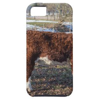 Funda Para iPhone SE/5/5s Becerros de Hereford en prado del invierno con