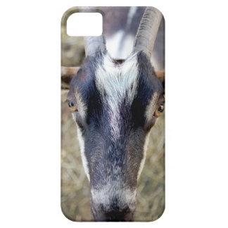 Funda Para iPhone SE/5/5s cabra que le mira