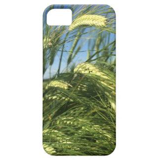 Funda Para iPhone SE/5/5s Caja del teléfono del campo de trigo