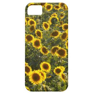 Funda Para iPhone SE/5/5s campo de flor del _sun