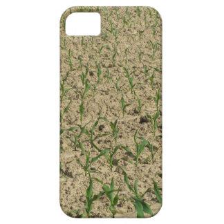 Funda Para iPhone SE/5/5s Campo del maíz del maíz verde en primero tiempo