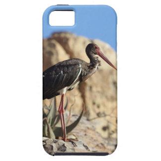 Funda Para iPhone SE/5/5s Cigüeña negra (nigra del Ciconia) en una roca