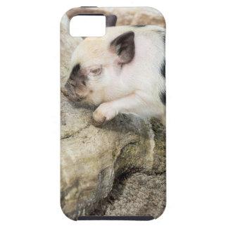 Funda Para iPhone SE/5/5s Cochinillo blanco y negro joven en el tronco de