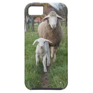 Funda Para iPhone SE/5/5s Cordero y ovejas