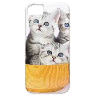 Funda Para iPhone SE/5/5s Cuatro gatos jovenes que se sientan en cuenco de