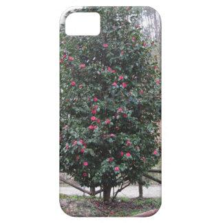 Funda Para iPhone SE/5/5s Cultivar japonés antiguo del japonica de la