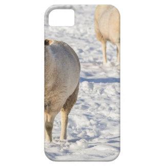 Funda Para iPhone SE/5/5s Dos ovejas que se colocan en nieve durante