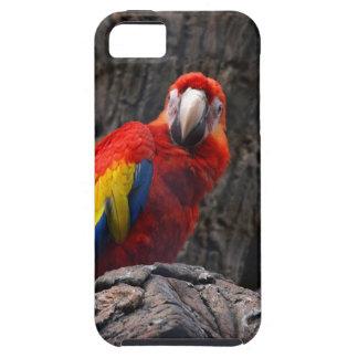Funda Para iPhone SE/5/5s El Ara del mascota de Papużka del pájaro del loro