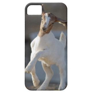 Funda Para iPhone SE/5/5s El jugar de la cabra del niño