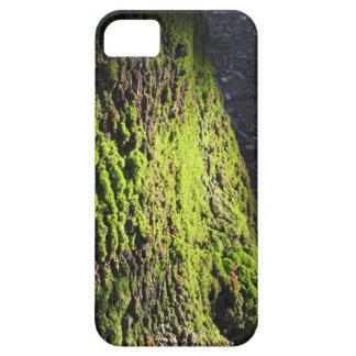 Funda Para iPhone SE/5/5s El musgo verde en el detalle de la naturaleza del