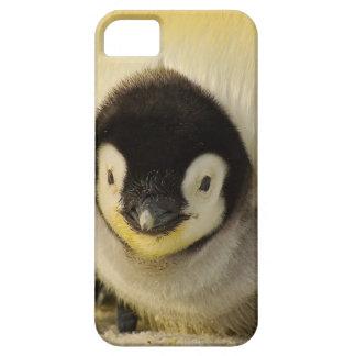 Funda Para iPhone SE/5/5s Emperador animal de la vida antártica del bebé del