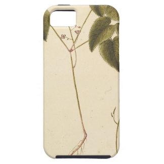 Funda Para iPhone SE/5/5s Estudio de la flor - acuarela