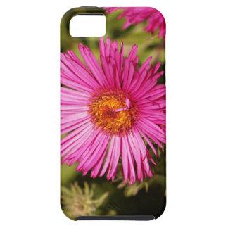 Funda Para iPhone SE/5/5s Flor de un aster de Nueva Inglaterra
