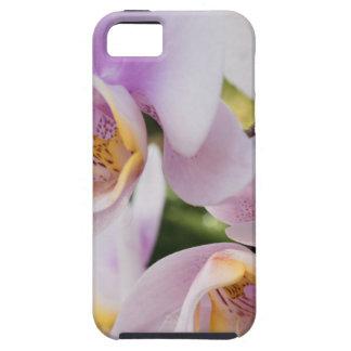 Funda Para iPhone SE/5/5s Floración suave blanca de las orquídeas