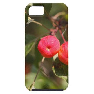 Funda Para iPhone SE/5/5s Frutas de un manzano salvaje