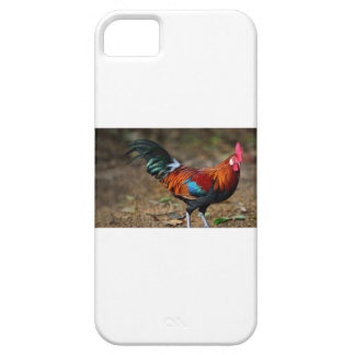 Funda Para iPhone SE/5/5s Gallo de la Leghorn de Brown