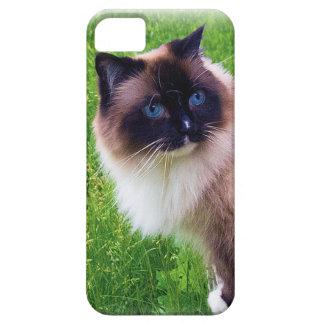 Funda Para iPhone SE/5/5s Gato hermoso de Ragdoll