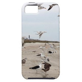 Funda Para iPhone SE/5/5s Gaviotas que vuelan, colocándose y comiendo en la