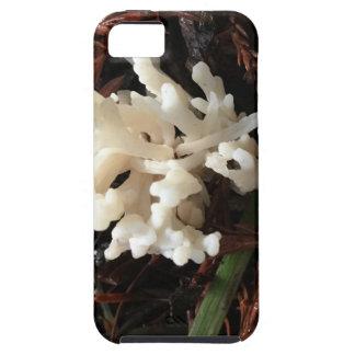 Funda Para iPhone SE/5/5s Hongo coralino de marfil