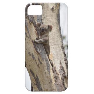 FUNDA PARA iPhone SE/5/5s KOALA EN EL ÁRBOL QUEENSLAND AUSTRALIA