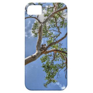 FUNDA PARA iPhone SE/5/5s KOALA EN EL ÁRBOL QUEENSLAND RURAL AUSTRALIA