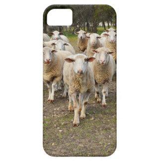 Funda Para iPhone SE/5/5s Las ovejas vienen marchando en Hurrah,