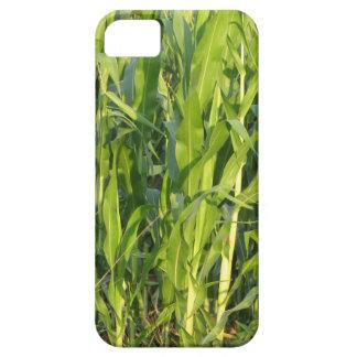 Funda Para iPhone SE/5/5s Las plantas de maíz verde están creciendo en