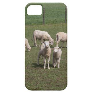 Funda Para iPhone SE/5/5s Manada de ovejas
