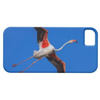 Funda Para iPhone SE/5/5s Mayor flamenco, roseus del phoenicopterus