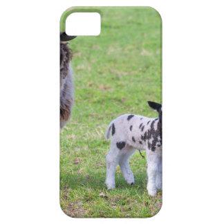 Funda Para iPhone SE/5/5s Mime a las ovejas con dos corderos recién nacidos