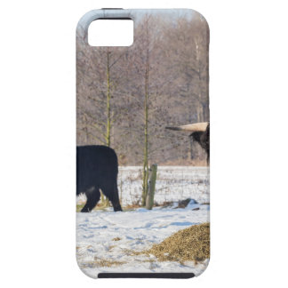 Funda Para iPhone SE/5/5s Montañeses escoceses negros en nieve del invierno