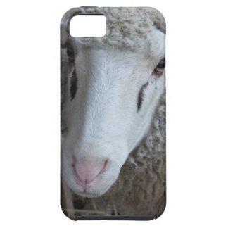 Funda Para iPhone SE/5/5s Ovejas con el heno