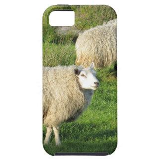 Funda Para iPhone SE/5/5s Ovejas irlandesas