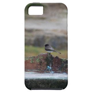Funda Para iPhone SE/5/5s pájaro en una pared
