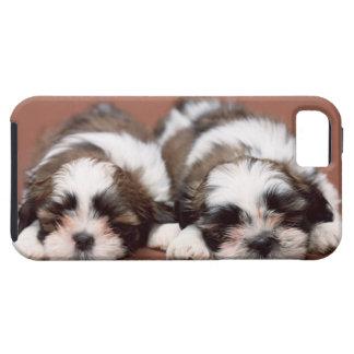 Funda Para iPhone SE/5/5s Perritos de Shih Tzu
